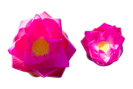 twain pink water lily flower (lotus) and white background photo