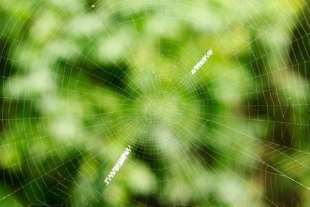 The spider web  closeup in the nature garden