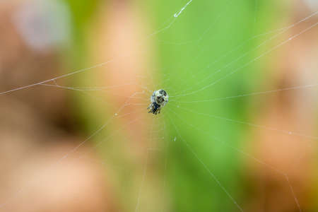 braids: The small beautiful spider braids the web