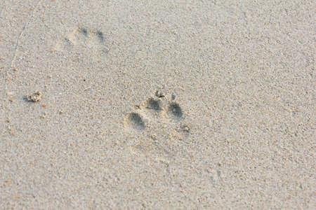 huellas de perro: Las Huellas de perro en la playa de arena
