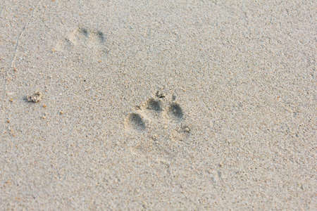 The Dog Footprints on the Sand beach Stock Photo