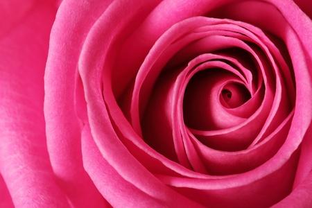 romance: Flor
