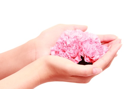 Holding pink carnations photo
