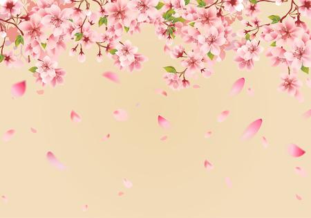 Cherry blossom sakura on gold  イラスト・ベクター素材