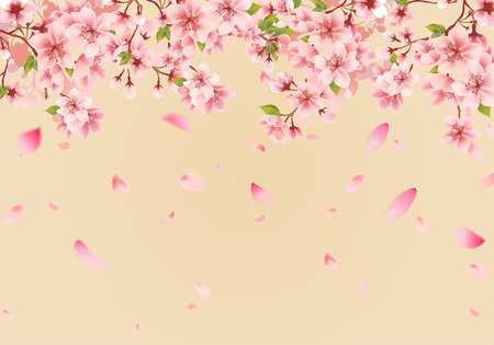 Cherry blossom sakura on gold 矢量图像