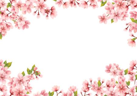 Sakura frame on white background