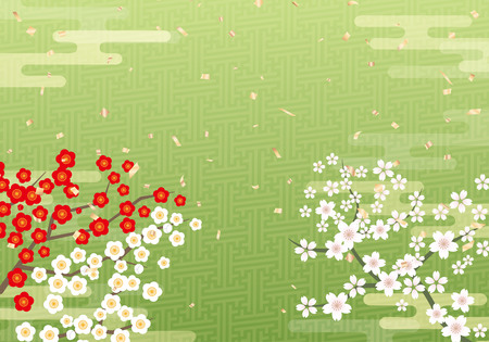 Cherry blossom sakura tree on Japanese