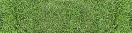 Green grass texture background. panorama picture