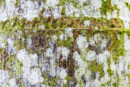 moss: White and brown natural barkwith green moss