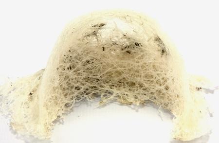 Des nids d'hirondelle avec une fourrure qui se nourrissent dans le sud de la Thaïlande