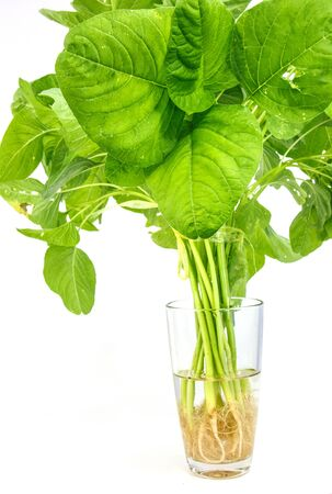 Fresh spinach in glass on white background Stock Photo - 17902877