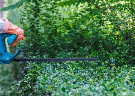 electric trimmer: Man trim hedge with electric equipment