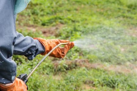 Un homme est la pulvérisation d'herbicide dans Fram qui a beaucoup de mauvaises herbes Banque d'images