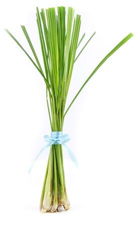 Lemon grass stand on  white background photo