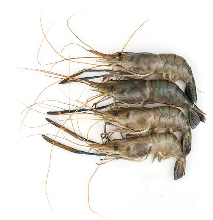 arrange: Raw shrimp arrange