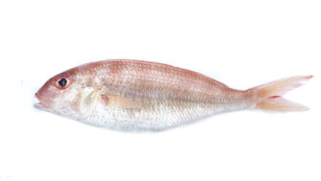 edible fish: Edible sea fish  isolated on white background