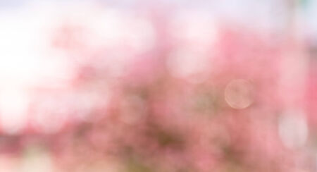 Pink blur abstract  bokeh background - nature  background