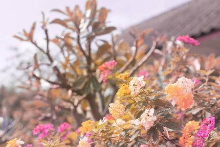beautifu: Beautifu small flowers as  soft nature background