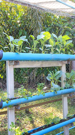asian gardening: Vertical garden - DIY with water pipe for cultivate vegetable