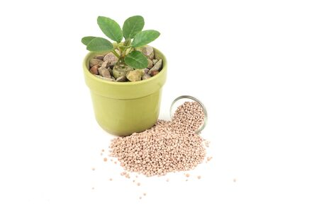 chemical fertilizer: Heap of chemical fertilizer and young plant against white background