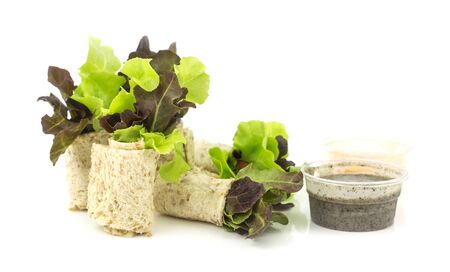 clean food: Group of clean food - salad rolls with healthy  sesame  sauce