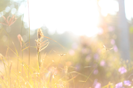 nature of sunlight: Beautiful morning landscape - grass and sunlight as nature background Stock Photo