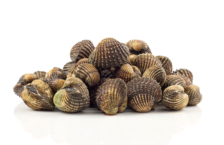 cockles: Heap of fresh cockles - seafood on white background