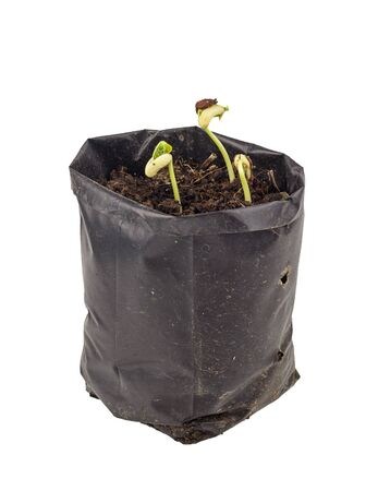 plant seed: Plant growing -  sprout from seed in bag isolated on white Stock Photo