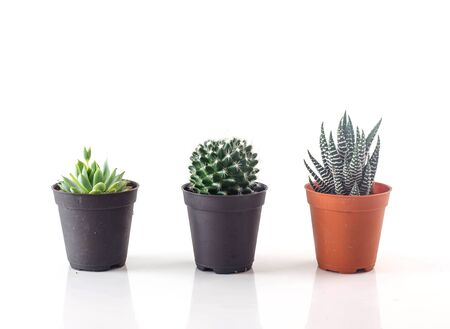 Three kinds of beautiful cactus against white background