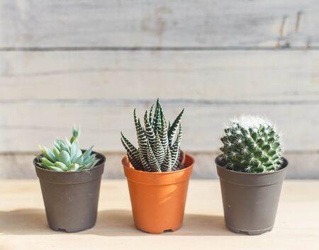 Trois beaux cactus sur fond blanc eood Banque d'images