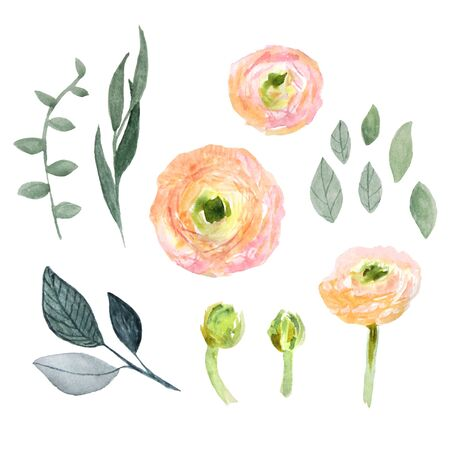 buttercup flower: Watercolor ranunculus and leaves set. Elegant plant collection.