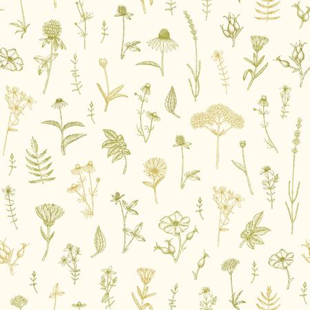 calendula: Vector hand drawn medicinal plant seamless pattern.