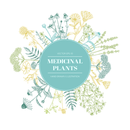 Vector hand drawn medicinal plants illustration, concept, template.