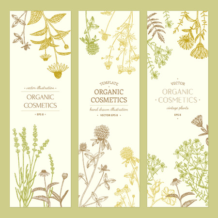 Vector hand drawn cosmetics plants illustration, concept, template. Illustration