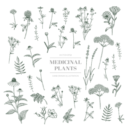 Vector hand drawn collection of medicinal, cosmetics herbs.