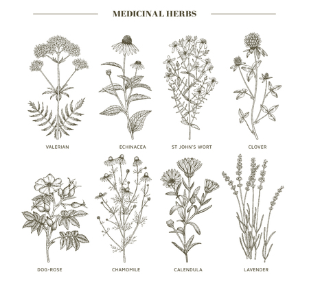 A Vector hand drawn collection of medicinal, cosmetics herbs. Ilustração
