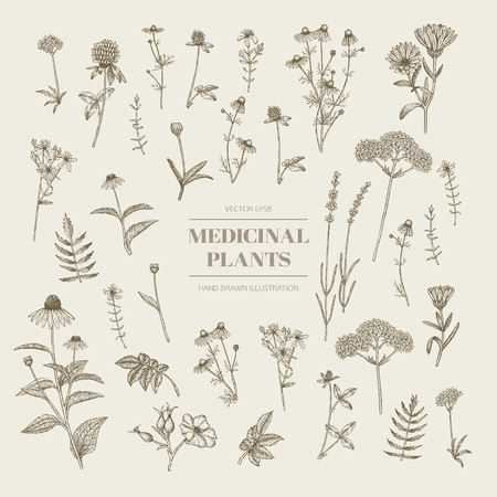 Vector hand drawn collection of medicinal, cosmetics herbs. St. Johns Wort, echinacea, lavender, valerian, chamomile, calendula, dog-rose, clover plants. Ilustração