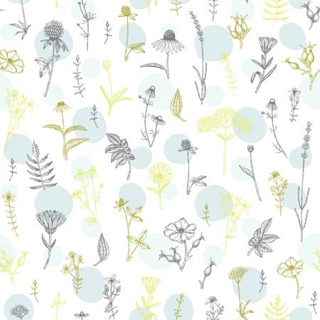 Modèle sans couture de vecteur dessiné main plante médicinale. Croquis, dessin, illustration de l'échinacée, calendula, trèfle, lavande, camomille, églantier, valériane, st. Plantes de millepertuis.