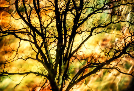 inexplicable: Artistic background with tree and moody colors Stock Photo