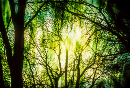 inexplicable: Artistic background with trees and moody green light