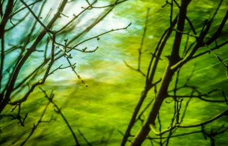 inexplicable: Artistic background with trees and moody green colors Stock Photo