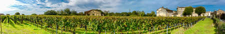 Panoramic view of vineyards in France 版權商用圖片