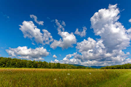 dreaminess: Summer view with clouds and blue sky