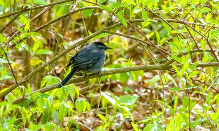 Mockingbird perched on a branch