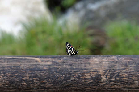Iguazu falls butterfly in Argentina