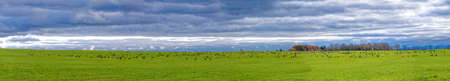 Panoramic view of a stop of a bustard group in migration