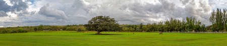 Panoramic view of a big tree and horses in northern Oahu Hawaii