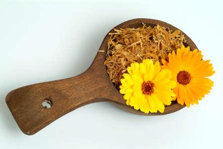 medicinal plant: Medicinal plant Calendula officinalis, dry and fresh blossoms Stock Photo