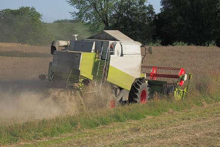 threshing: Combine harvester at rape threshing