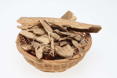 medicinal plant: bark of Tree of Heaven, Ailanthus altissima, medicinal plant